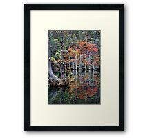 In The Cypress Swamp Framed Print
