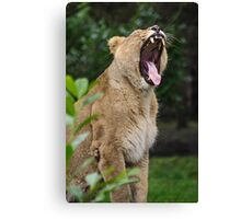 A Roaring Momment Canvas Print