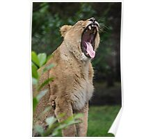 A Roaring Momment Poster