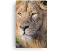 Lions Eye Canvas Print