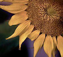 Sun Flower by Erin LeFevre-Josephs
