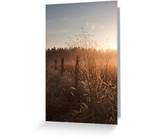Golden Morning, Franklin County, NC Greeting Card