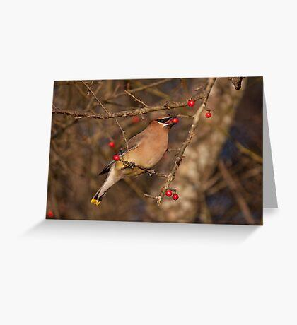 Cedar Waxwing  Jordan Lake, NC Greeting Card