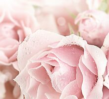 Pastel Pinks by Stephanie Frey