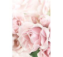 Pastel Pinks Photographic Print