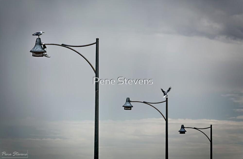 Seagulls Shoes by Pene Stevens