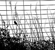 Sparrow by Karen  Betts