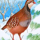The Red-Legged Partridge by Véronique Cole by aquartistic