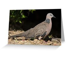 Spotted Dove (2) Greeting Card