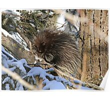 A porcupine I might be but warmth is really all I need Poster