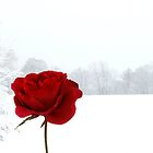 Red on white by Yool
