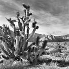 Joshua Tree, Red Rock Canyon National Conservation Area, Nevada by Rodney Johnson