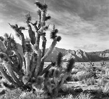 Joshua Tree, Red Rock Canyon National Conservation Area, Nevada by Rodney Johnson