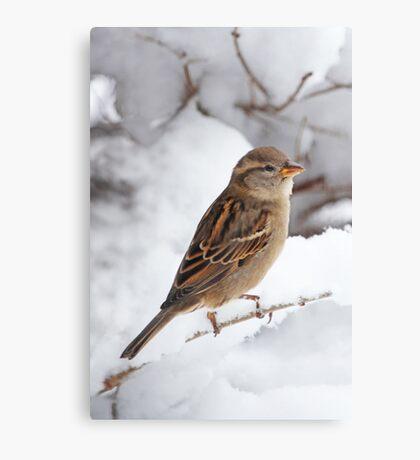 Winter Sparrow ~ Canvas Print