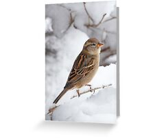 Winter Sparrow ~ Greeting Card