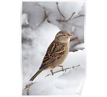 Winter Sparrow ~ Poster