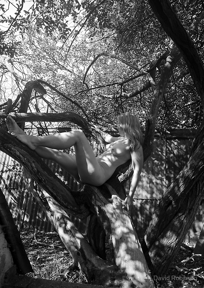 M in the Tree No.4 by David Robinson
