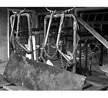 Cow-Hanger Photographic Print