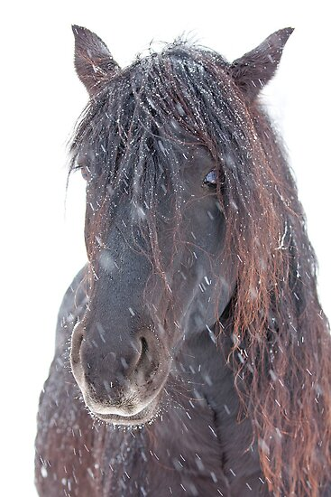 Horse in snowfall by Jim Cumming