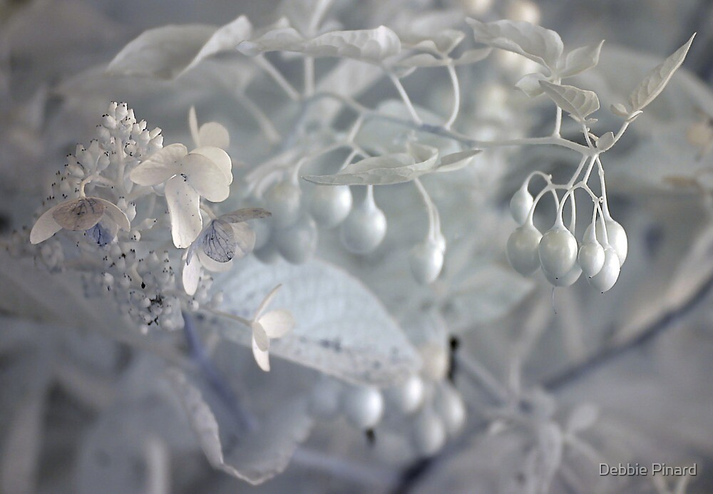 White Berries - Infrared by Debbie Pinard
