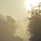 Early Morning Fog by ©Dawne M. Dunton