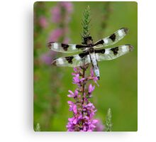 Indian Park Dragonfly Canvas Print