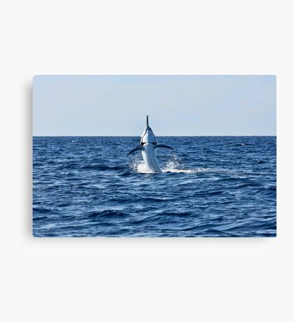 Marlin Canvas or Print - Giant Black Marlin - Spread 'Em Canvas Print