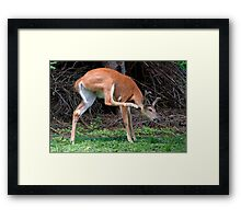 Man, I've Got An Itch, Right Here! Framed Print