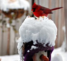Always Feed the Birds by Grinch/R. Pross