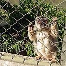 """""""Please let me out!"""" by JenniferLouise"""
