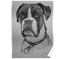 Hector the Boxer Poster