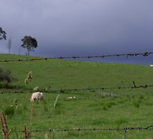 Behind a country fence line by Clare Colins