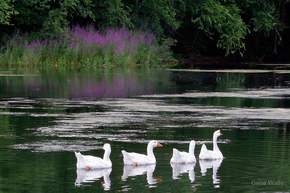 Cruising The Lake by Gene Walls