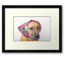 Joey in his travel mode. Framed Print