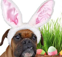 Easter Boxer Dog by ritmoboxers