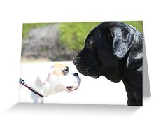 Boxer and Tosa Inu meet Greeting Card