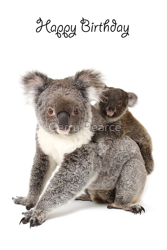 Quot A Koala Happy Birthday 1p Quot Greeting Cards By Gerry Pearce