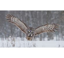 Great Gray Owl Moving In... Photographic Print