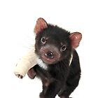 A Tasmanian Devil get well card 1P by Gerry Pearce
