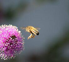 Bee in Flight by Chris Kean