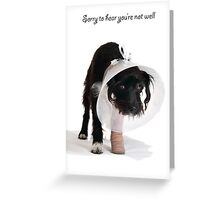 A get well card from Chewy 1P Greeting Card
