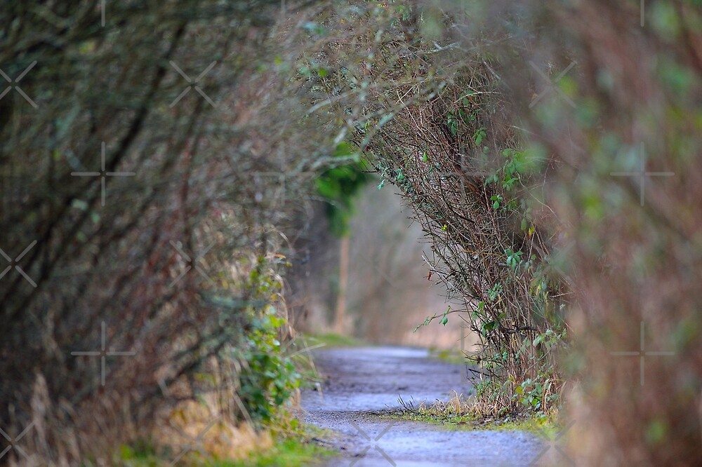 Take This Path to ? by Randy Giesbrecht