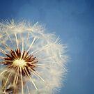 Blue Sky Wishes by Tamara Brandy