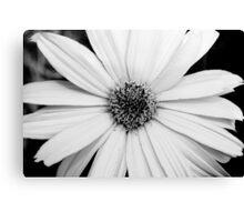 monochrome daisy Canvas Print
