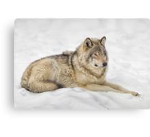 Timberwolf at Rest Canvas Print