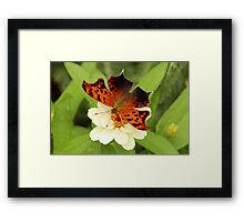 Question Mark Butterfly on Flower Framed Print