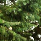 Little Bird by Tamara Brandy