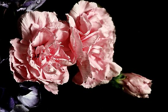 """""""Otaki Pinks""""  by Rosehaven"""