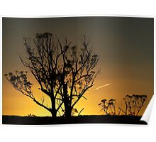 Trees in Sunset Poster
