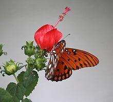 Butterfly on Turk's Cap by Bob Hardy